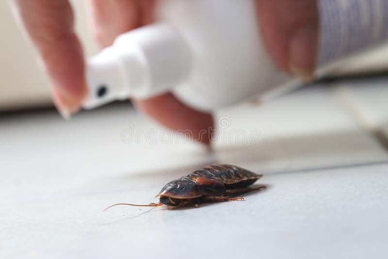 Zarazy kontroli kobiety opryskiwania pestycyd na karakanie obraz stock