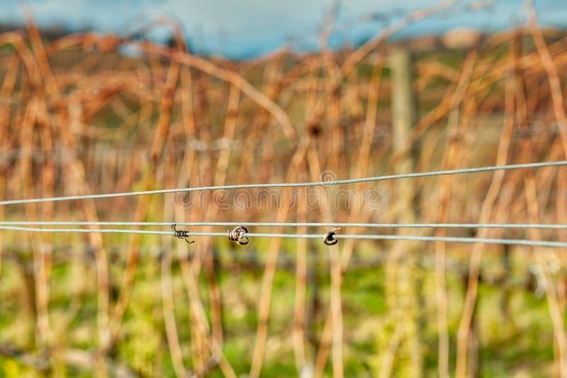 Zarcillos secados en el alambre foto de archivo