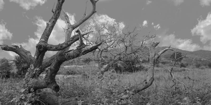 Zarobaczony las duchami ciemny las z drzewami i czarny i biały strzałem fotografia stock