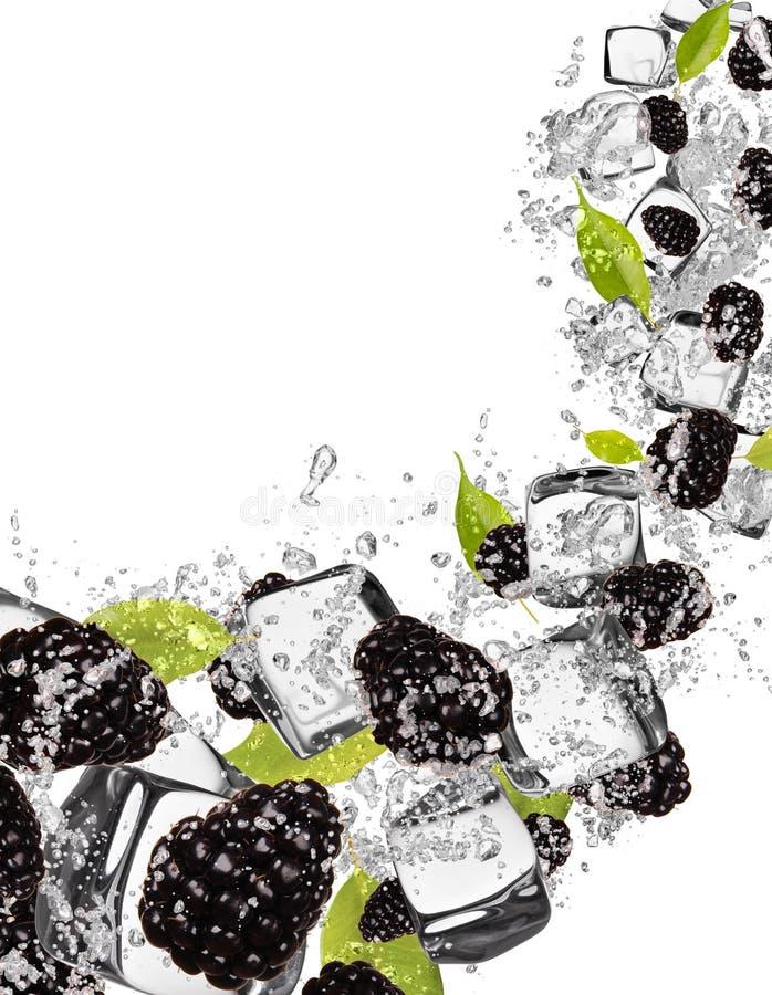 Zarzamoras en chapoteo del agua en el fondo blanco stock de ilustración