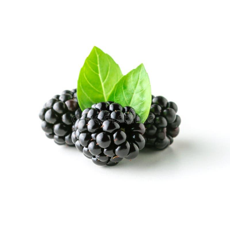Zarzamoras orgánicas maduras frescas con la hoja verde en el fondo blanco Concepto del alimento foto de archivo libre de regalías