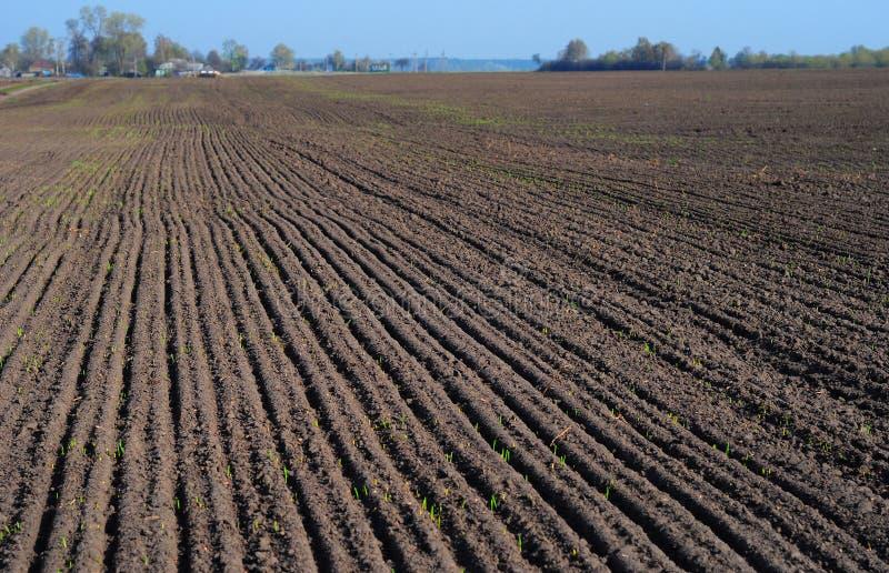 Zasadzać pszenicznego pole w wiośnie Zaorany pole zdjęcia stock