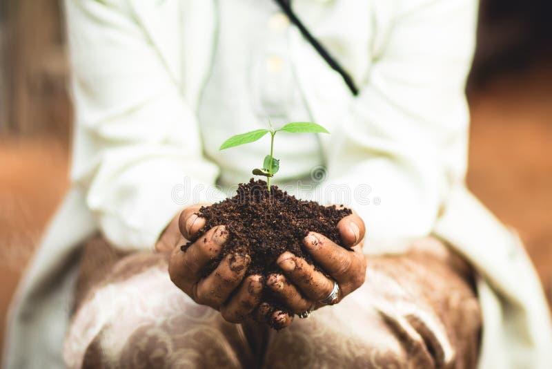 Zasadza drzewa ziemia i rozsady w babci ` s wręczają fotografia stock
