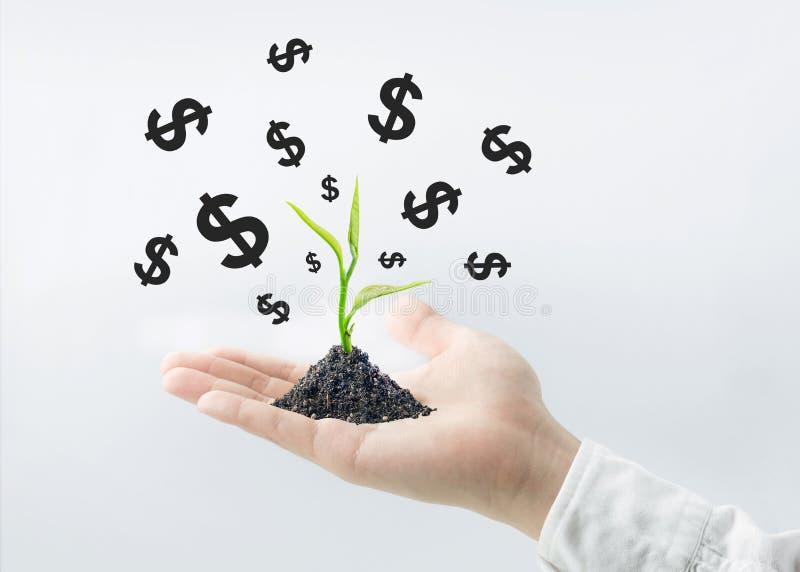 Zasadza drzewnego dorośnięcie z Dolarowym znakiem na biznesmen ręce Biznes zdjęcie royalty free