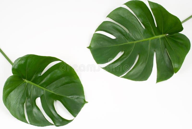 zasadza tropikalnego fotografia stock