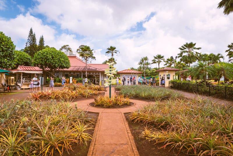 Zasiłek dla bezrobotnych ananasowa plantacja, jeden sławni turystyczni przyciągania na Oahu wyspie zdjęcie stock