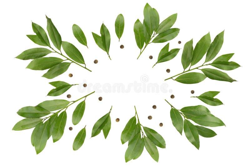 Zasięrzutna fotografia zatoka rozgałęzia się jak wianek Zielone bobek gałązki dla eco cookery biznesu Podpalana gałąź i peppercor zdjęcie stock