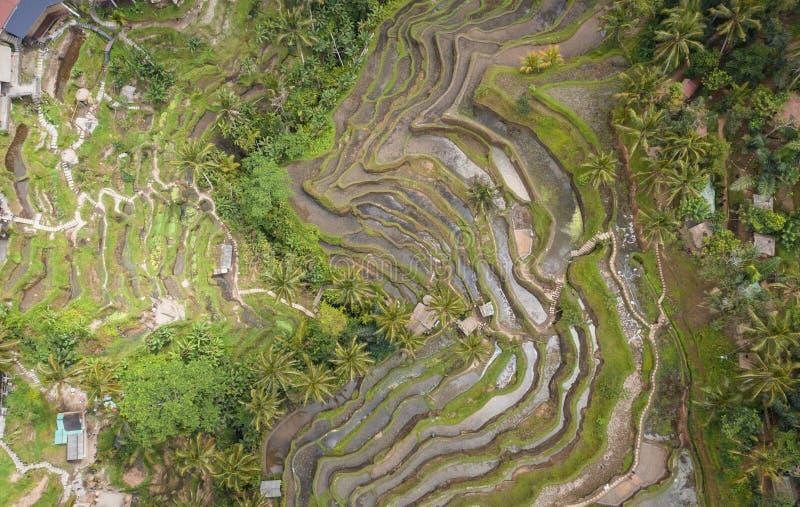 Zasięrzutny widok z lotu ptaka Tegallalang Rice taras Ubud Bali, Indonezja - abstrakcyjny t?o zdjęcie stock
