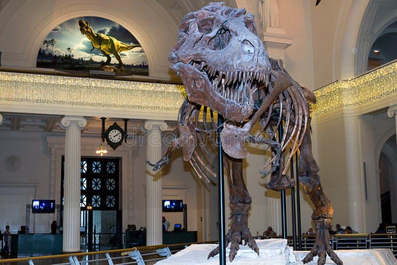 Zaskarża t-Rex   fotografia stock