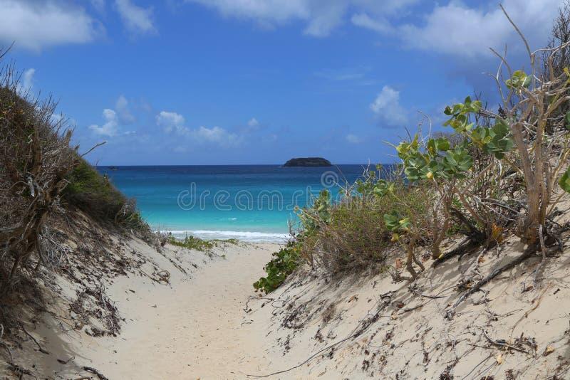 Zasolona plaża, St Barts, Francuscy Zachodni Indies obraz royalty free