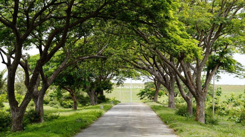 Zastanawia się drzewnych tunelowych spojrzenia jak dlaczego? zdjęcie royalty free