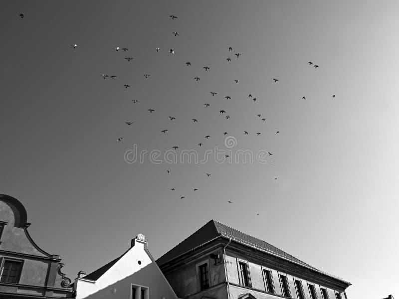 Zatec, Τσεχική Δημοκρατία - 25 Οκτωβρίου 2019: πτηνά άνω του Chram Nanebevzeti P Η Μαρία στην πλατεία Χοσταλκόβο Ναμωστί στην πόλ στοκ εικόνα με δικαίωμα ελεύθερης χρήσης