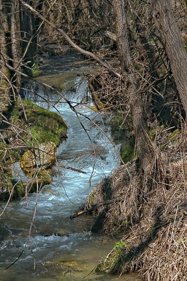 Zatoczki ciurkanie między drzewami fotografia royalty free