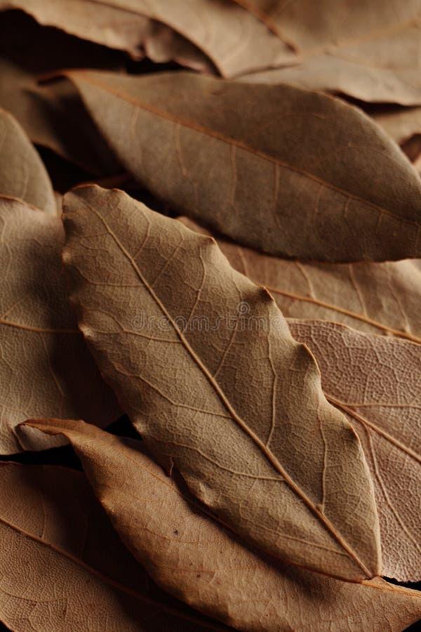 zatoka liść wysuszony zielarski zdjęcia royalty free
