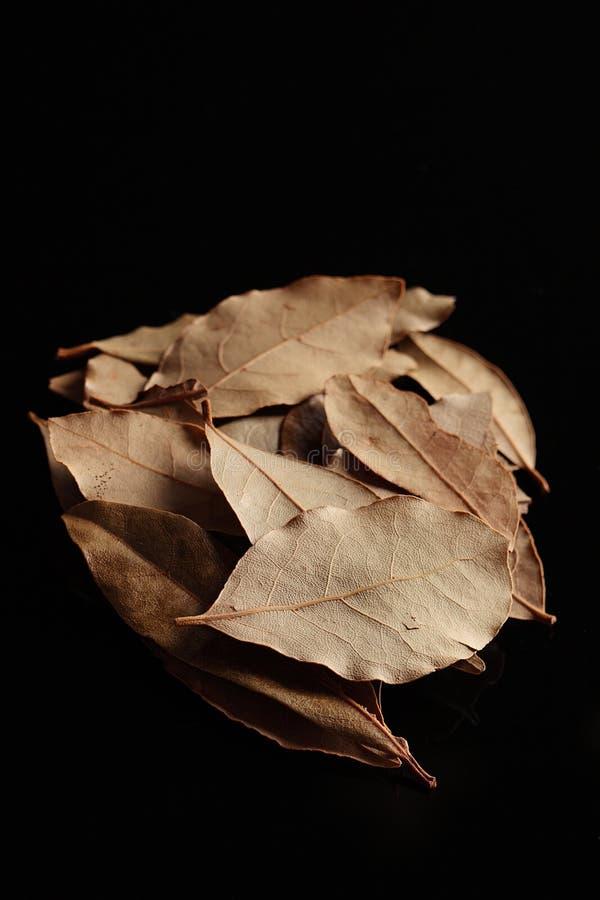 zatoka liść wysuszony zielarski fotografia stock