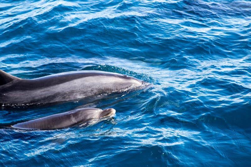 Zatoka wyspa delfiny fotografia stock