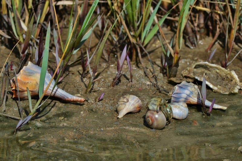 Zatoki wybrzeża Seashells III obraz royalty free