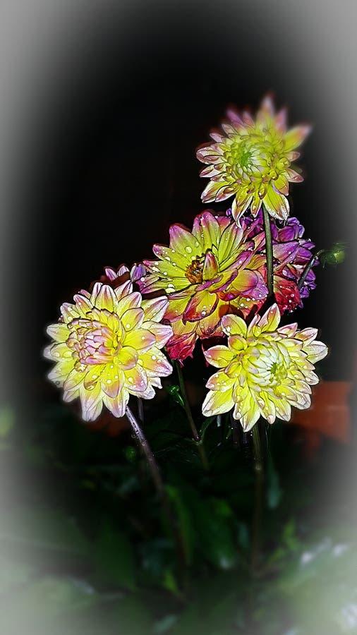 Zatrzymuje kwiaty i wącha! zdjęcie stock