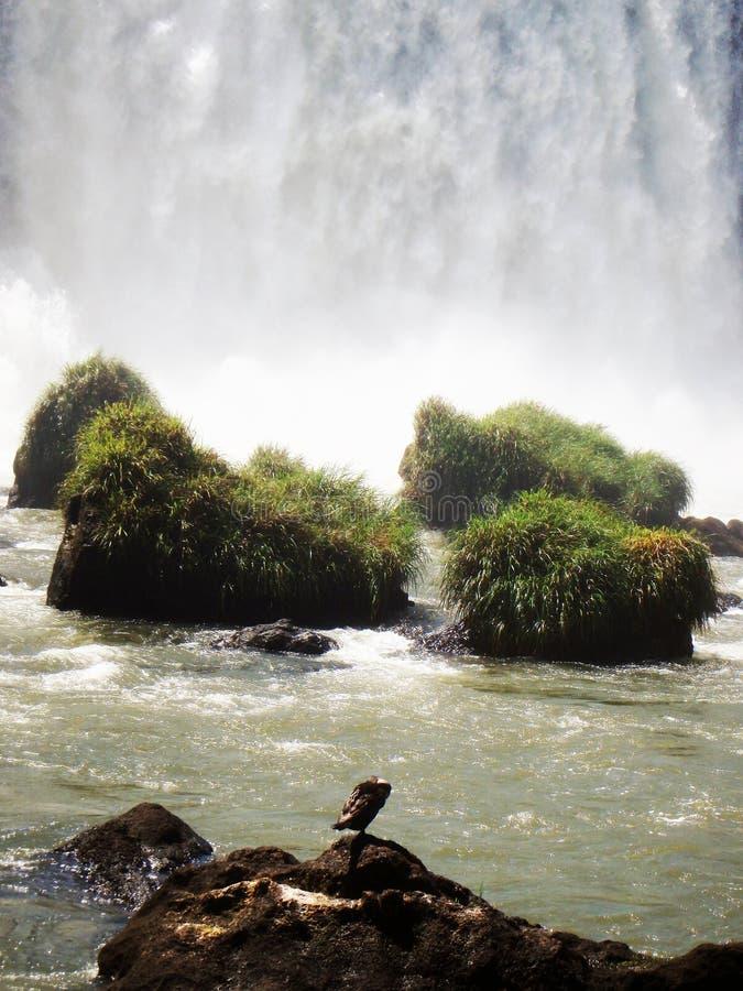 Zauber-Wasserfall stockbild