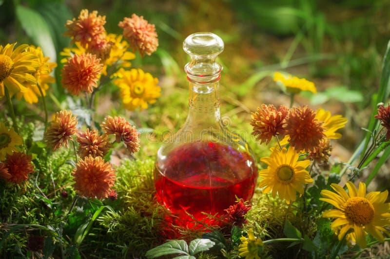 Zaubertrank in der Flasche im Wald lizenzfreie stockfotos