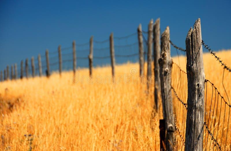 Zaun auf einem Maisgebiet stockbild