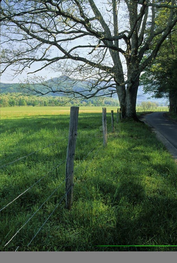 Zaun, Baum, Straße, Frühling lizenzfreie stockfotos