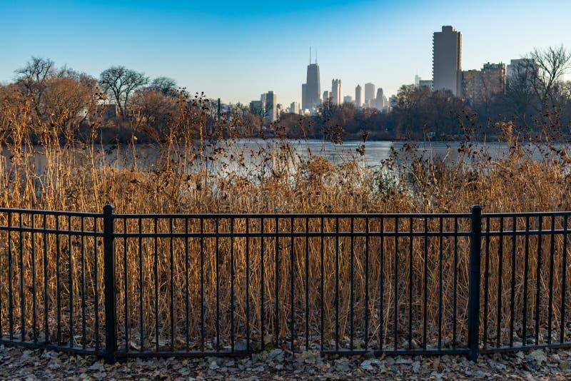 Zaun mit gebürtigem Grasland-Gras-umgebendem Nordteich in Lincoln Park Chicago mit den Skylinen stockfotografie