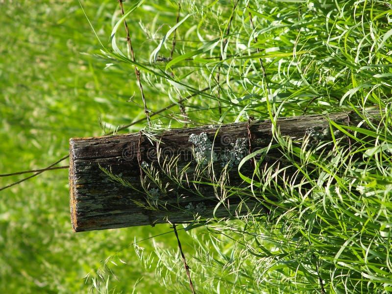 Zaun Post2 Stockbilder