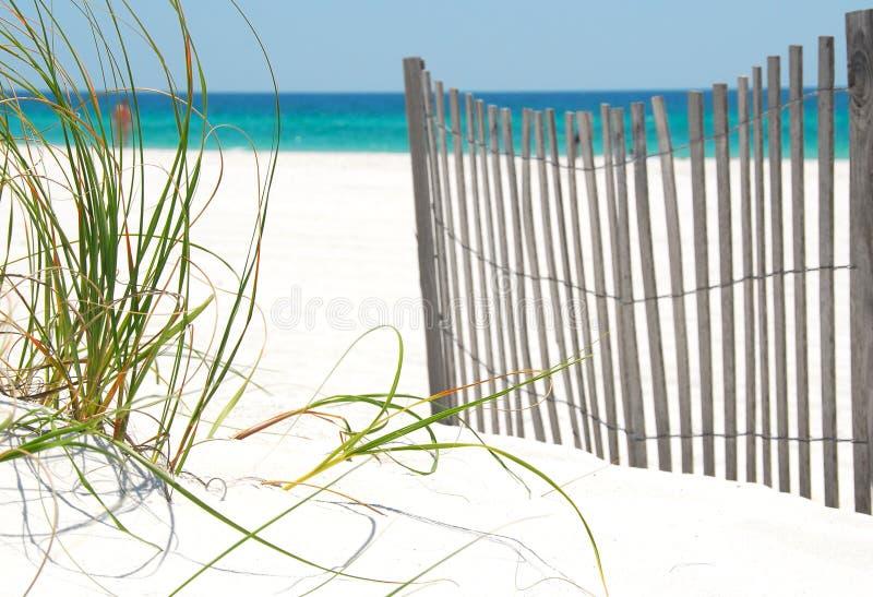 Zaun und Gras auf Pensacola-Strand stockfoto