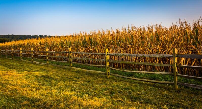 Zaun- und Maisfeld auf einem Bauernhof in ländlichem York County, Pennsylvani stockbilder