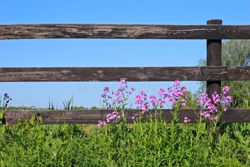 Zaun und wilde Blumen lizenzfreie stockfotos
