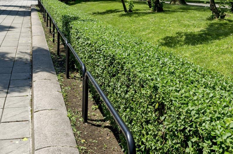Zaun von Quickset oder Hecke und Eisen leiten in den Park stockfoto