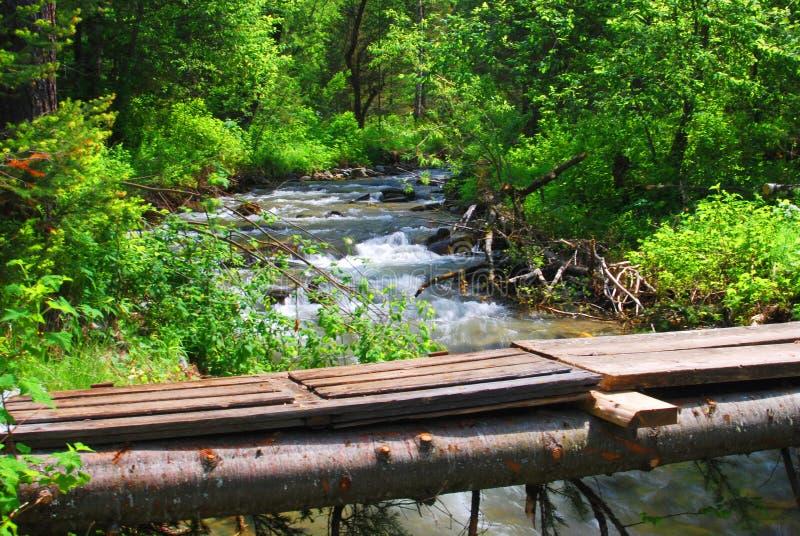 Zawdzięczający sobie most nad halną rzeką w lesie obraz royalty free