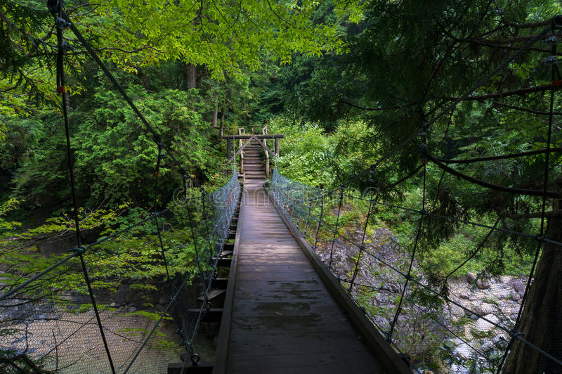 Zawieszenie most w lasowym krajobrazie obrazy royalty free