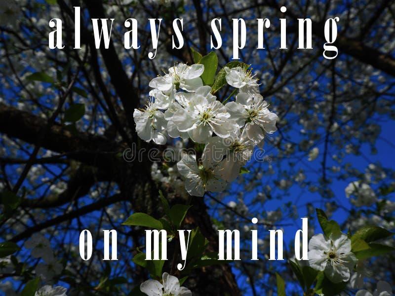 Zawsze wiosna na mój umysle zdjęcie stock