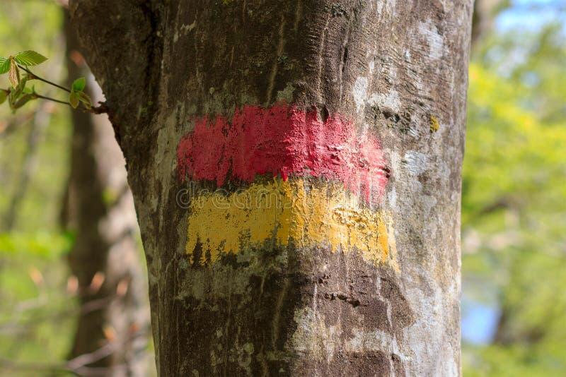 Zaznacza pointeru dla turystów na barkentynie drzewo na turystycznej trasie obrazy royalty free