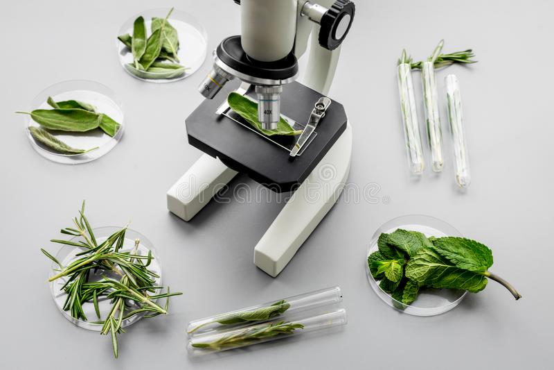 Zbawczy jedzenie Laboratorium dla karmowej analizy Ziele, zielenie pod mikroskopem na popielatego tła odgórnym widoku obrazy stock
