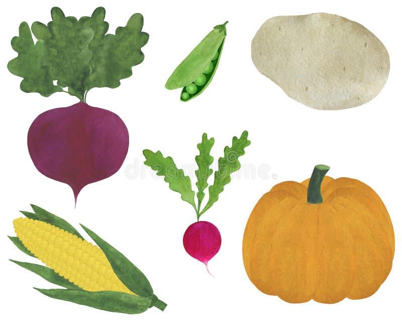 Zbiór świeżych warzyw akwarela ilustracja wegetarianizm składniki gotowania dyni ziemniaczanej groszek rzodkiewka buraczana ilustracja wektor