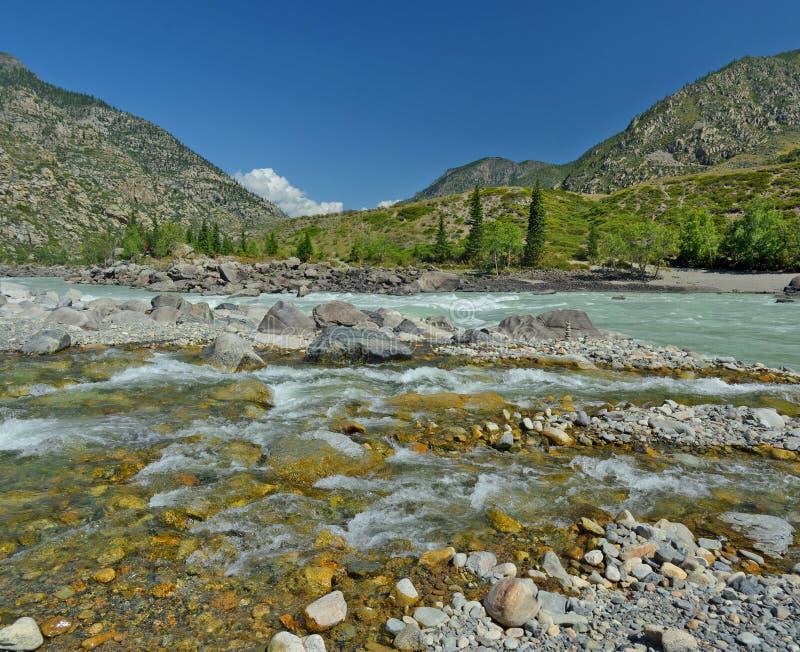 Zbieżność halny strumień z jasną wodą w błotnistym nawadnia rzeczny Katun, Altai góry, Syberia, Rosja fotografia royalty free