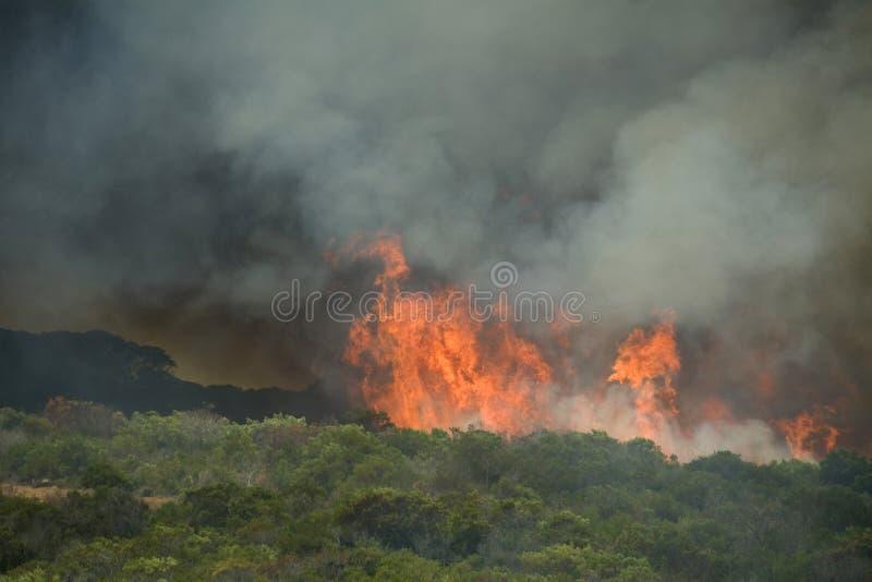Zbiega krzaka nabrzeżny ogień zdjęcie stock