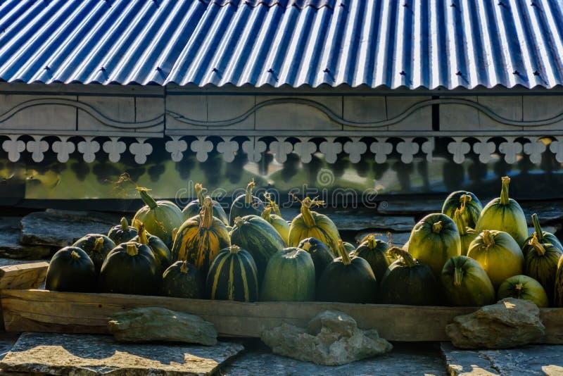 Zbierać banie na dachu obrazy royalty free