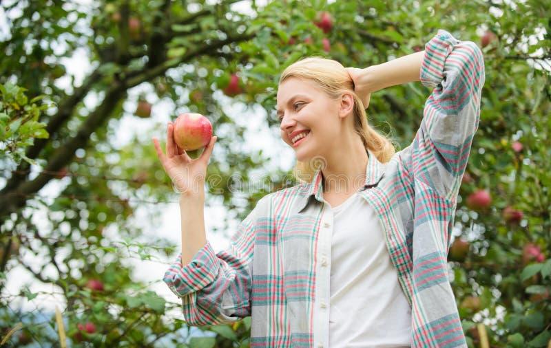 Zbierać jabłka od owocowego drzewa wiosny żniwa lata owoc Szczęśliwa kobieta Je Apple zdrowe zęby głód zdjęcia royalty free