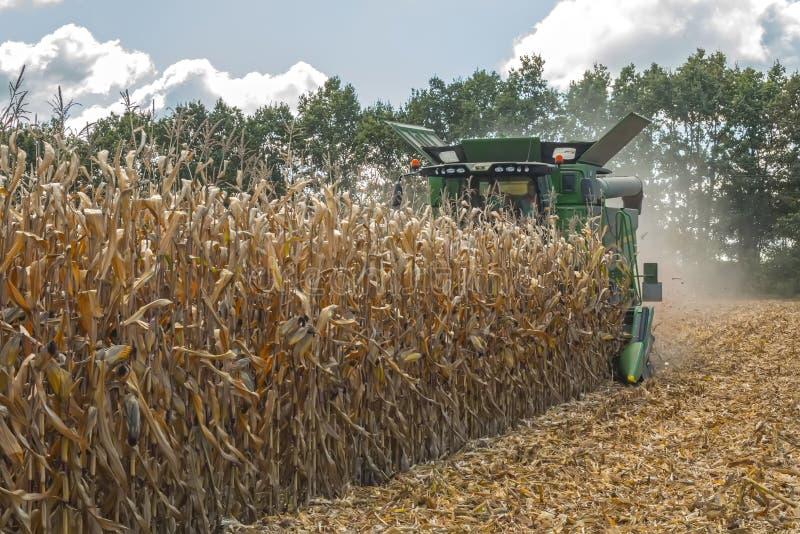 Zbierać kukurudzy syndykata żniwiarzem, podążać rozładowywać i transportem adra Pracuje w polu w promieniach su zdjęcie stock