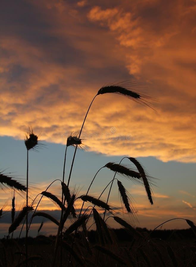 Zbierać pole przy zmierzchem z dramatycznymi chmurami zdjęcia stock