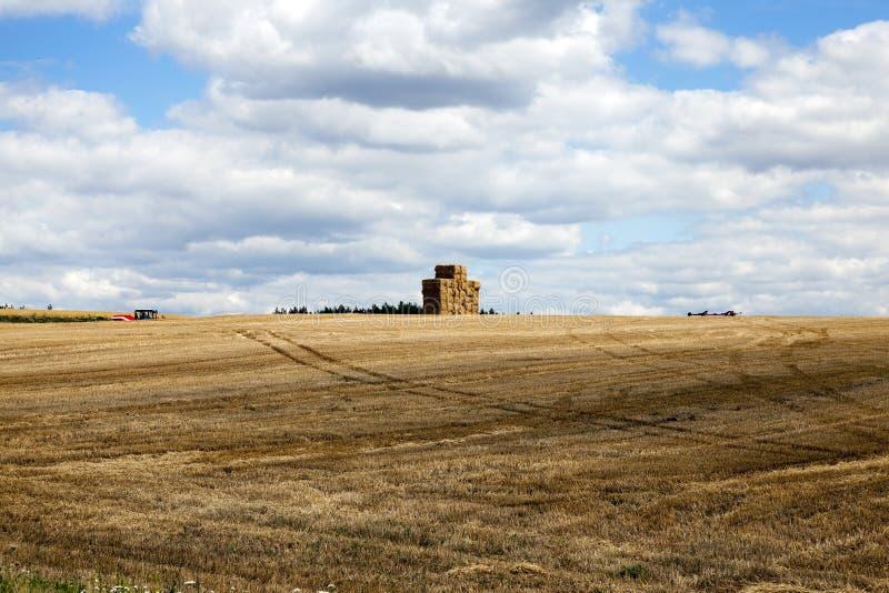 Zbierać pszenicznego żniwo zdjęcie royalty free