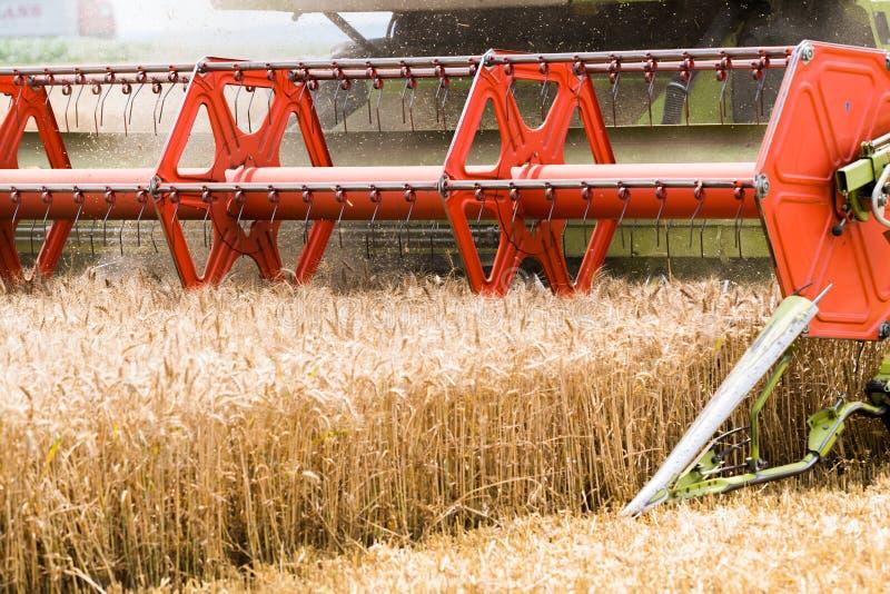 Zbierać pszeniczny pole obraz stock