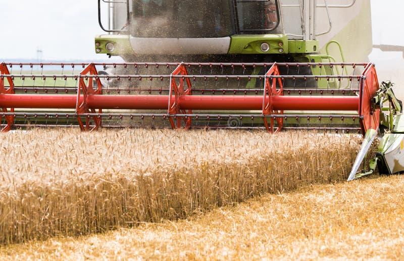Zbierać pszeniczny pole fotografia stock