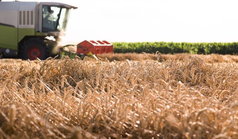 Zbierać pszeniczny pole z syndykatem obraz stock