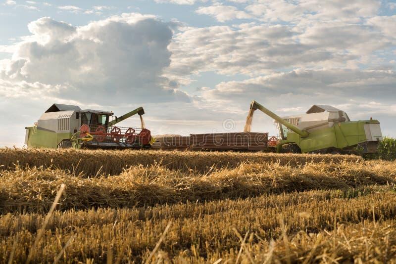 Zbierać pszeniczny pole z syndykatem fotografia royalty free
