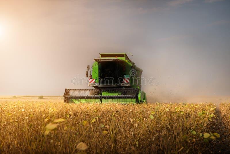 Zbierać soi pole z syndykatem zdjęcia royalty free